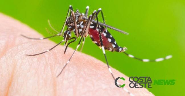 Pato Bragado confirma primeiro caso de dengue de 2019