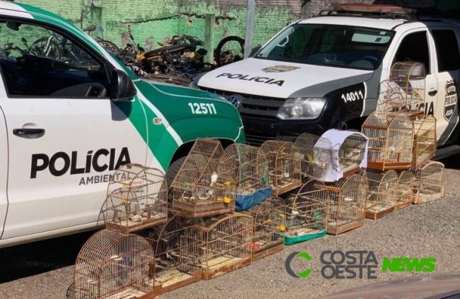 Após denúncias, forças de segurança apreendem 18 pássaros silvestres e detêm quatro pessoas
