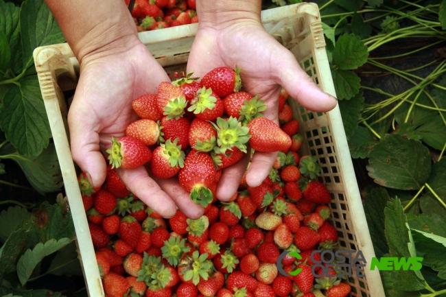 Estado quer ampliar crédito para cooperativas da agricultura familiar