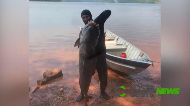 Pescador captura carpa cabeçuda de 70 quilos na região Oeste