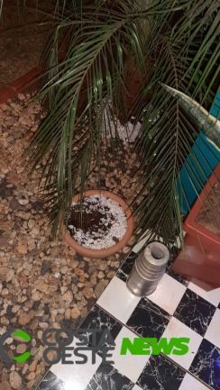 Ladrão de rosas do deserto volta a praticar novo furto em residência de Santa Helena