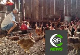 Produção de frango caipira mantém família no campo