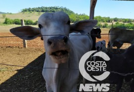 Em propriedade diversificada, produtor rural prioriza soja e gado de corte fica em segundo plano