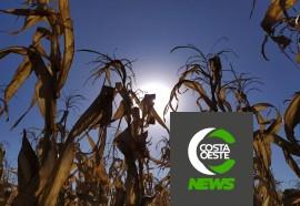 Expedição Costa Oeste: Com temperatura negativas geadas voltam a castigar lavouras e pastagens