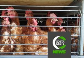 'Os Caminhos da Ração' visita propriedade de ovos de postura comercial - Nº 61
