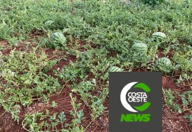 Expedição Costa Oeste: Casal deixa emprego na cidade para se tornar produtor de melancias