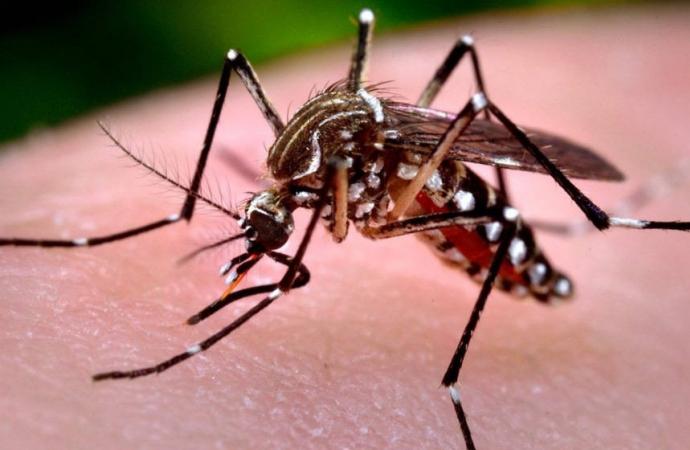 Boletim semanal da dengue confirma mais 873 casos no Estado