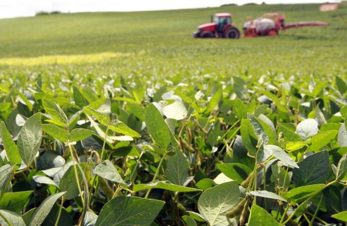 Clima irregular atrasa o plantio da soja no Paraná, aponta boletim