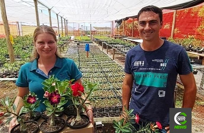 Conheça a produção de rosas do deserto que iniciou como terapia e hoje é um negócio de 40 mil plantas
