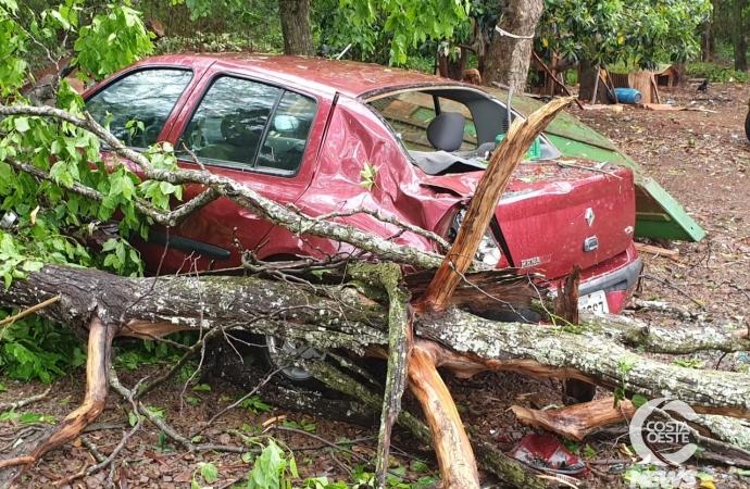 Corpo de Bombeiros é acionado após queda de árvore sobre veículo em Santa Helena