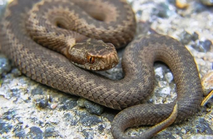 Corpo de Bombeiros orienta como proceder em situações de acidentes com cobras no verão