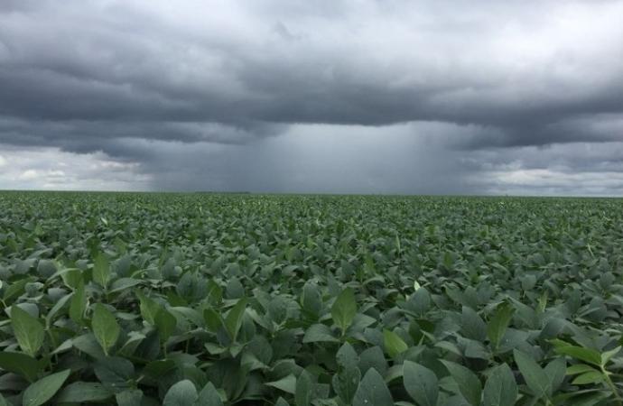 Excesso de chuva e falta de luz solar podem influenciar em produtividade menor nas lavouras de soja