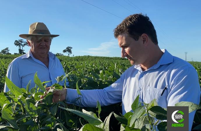 Lavouras crescem com a força do cooperativismo na região oeste do Paraná