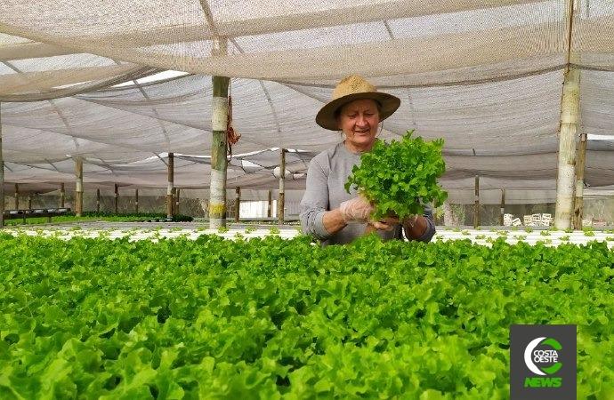 Família encontra vocação na produção de hortaliça hidropônicas