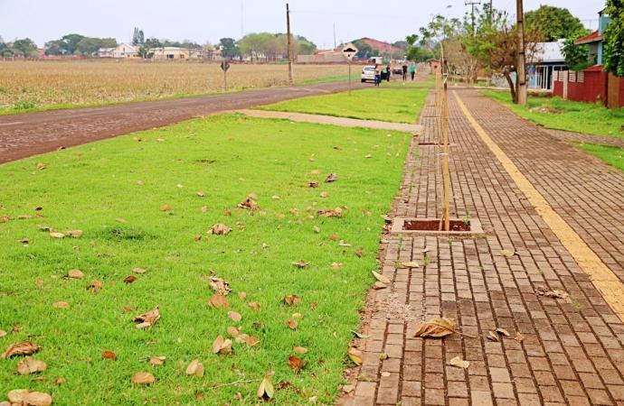 Mais de 400 mudas de árvores foram plantadas em calçadas do Bairro Caramuru