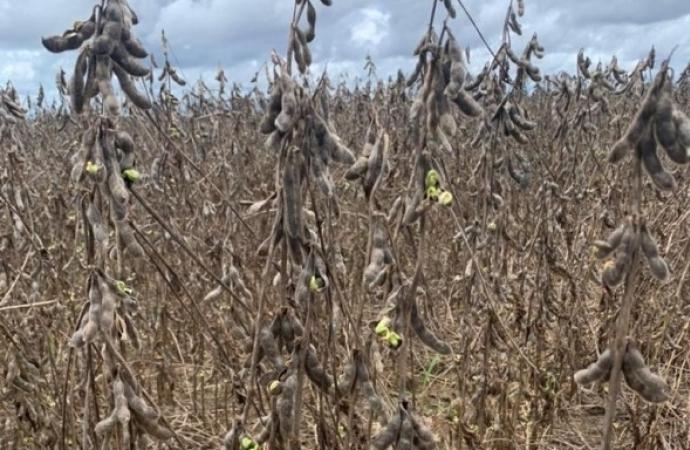 'Nossa realidade é triste, com soja podre e tudo caindo', desabafa produtor de MT