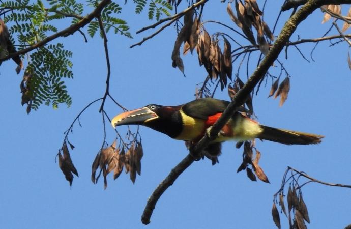 Parque Nacional do Iguaçu fortalece o birdwatching e credencia condutores para observação de aves