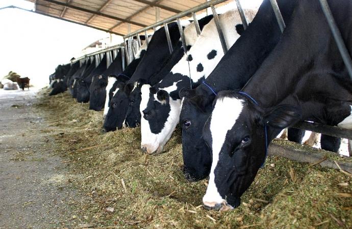 Pecuária de leite vive incertezas quanto ao preço de insumos