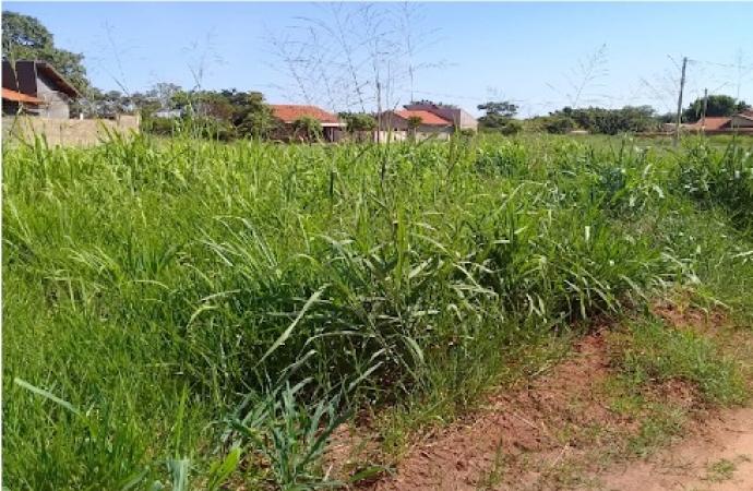 Proprietários de terrenos baldios em situação de abandono serão notificados em Santa Helena