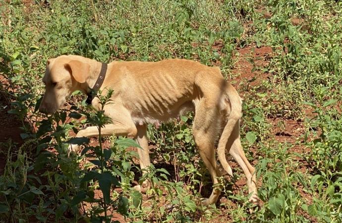 São Miguel: Polícia Civil resgata cadela com quatro filhotes vítimas de maus tratos