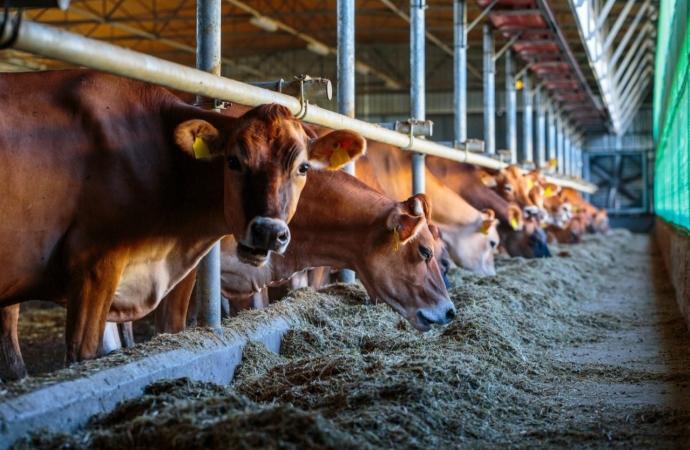 UNIGUAÇU oferece curso presencial gratuito para produtores de São Miguel e região sobre nutrição de bovinos leiteiros
