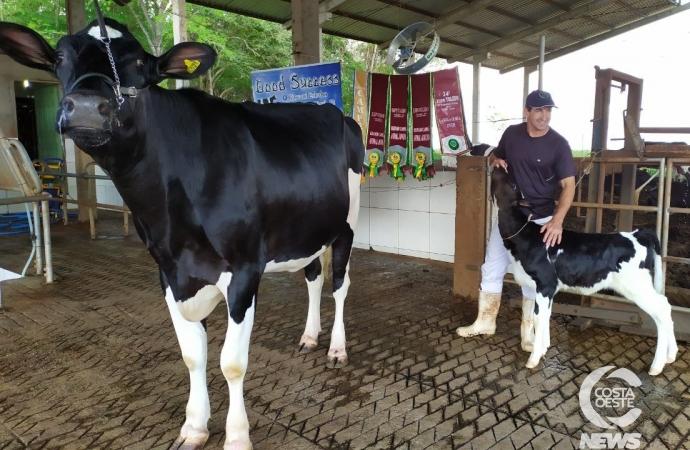 Vaca holandesa premiada de Missal é resultado de melhoramento genético e boas práticas de manejo