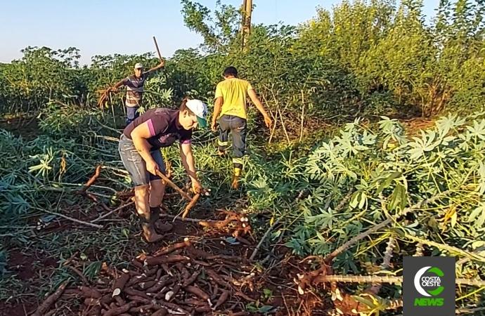 Você já ouviu falar em mandioca orgânica? Família encontra importante e saudável fonte de renda