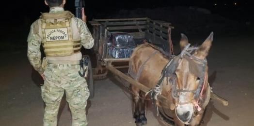 Burro puxando carroça carregada de maconha é apreendido em Guaíra