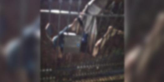 """Homem tenta assalto em casa de idosa e acaba """"empalado"""" no portão, em Céu Azul"""