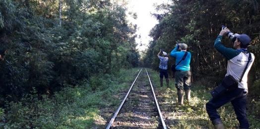 Ibama inicia nova fase dos estudos de impacto ambiental da Nova Ferroeste