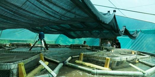 Mirando uso racional da água, Embrapa e Itaipu desenvolvem projeto para produzir peixes em sistema de bioflocos