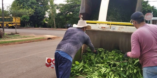 Recolha de galhos é iniciada em Serranópolis do Iguaçu