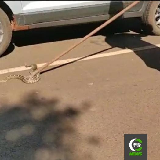 Cobra é encontrada dentro de motor de carro em Missal; vídeo