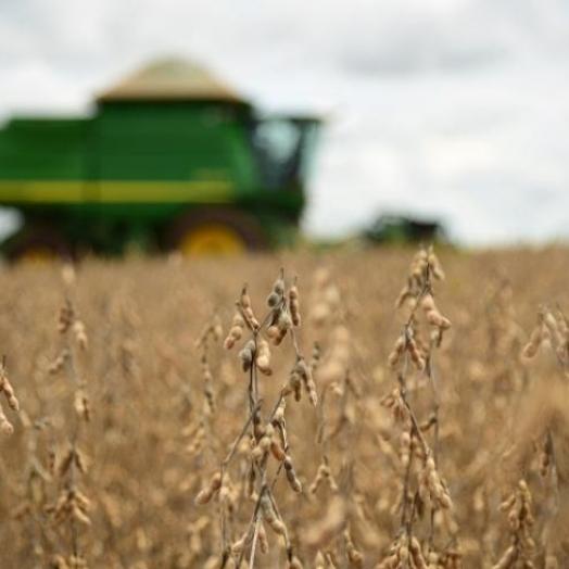 Lavouras de soja semeadas em setembro devem ser colhidas a partir da próxima semana em Santa Helena