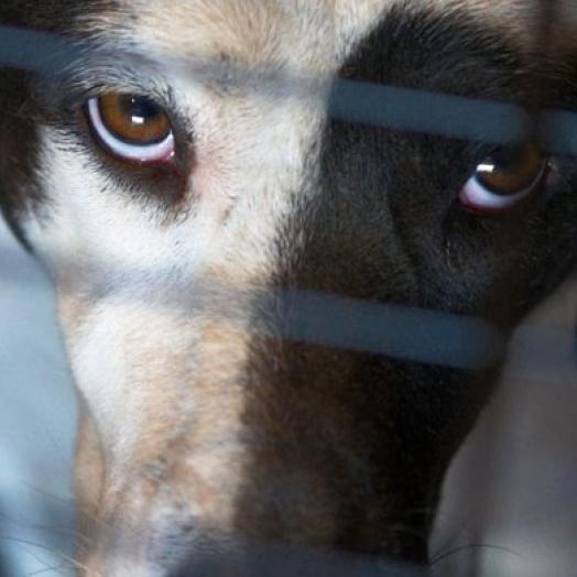 Homem é preso por maus-tratos à animais em Itaipulândia