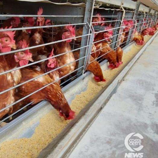 Paraná registra crescimento na produção de frangos, suínos e leite no 2º trimestre