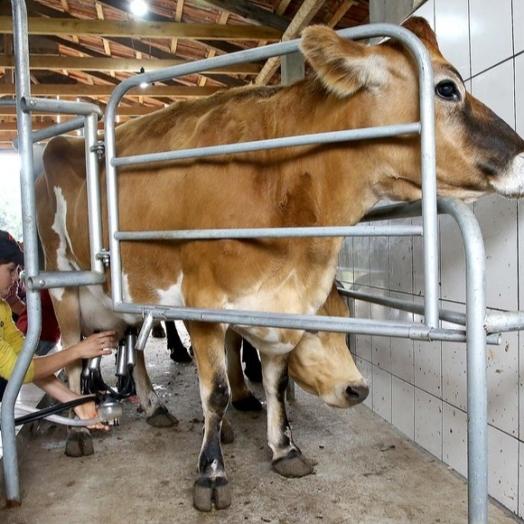 Preço do leite pago aos produtores teve redução no primeiro bimestre