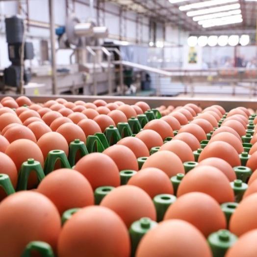 Preço do ovo aumenta em fevereiro para produtor, atacado e varejo