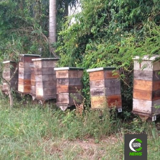 Produtores de mel estão animados com a safra 2020/21